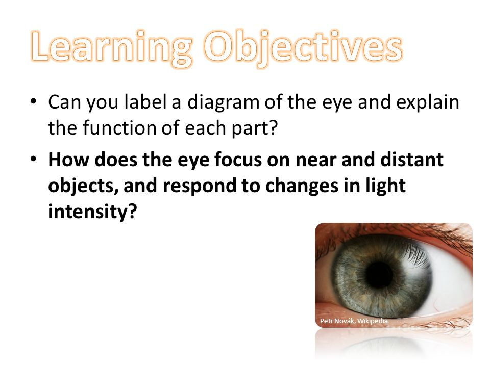 Learning objectives can you label a diagram of the eye and explain learning objectives can you label a diagram of the eye and explain the function of each ccuart Choice Image