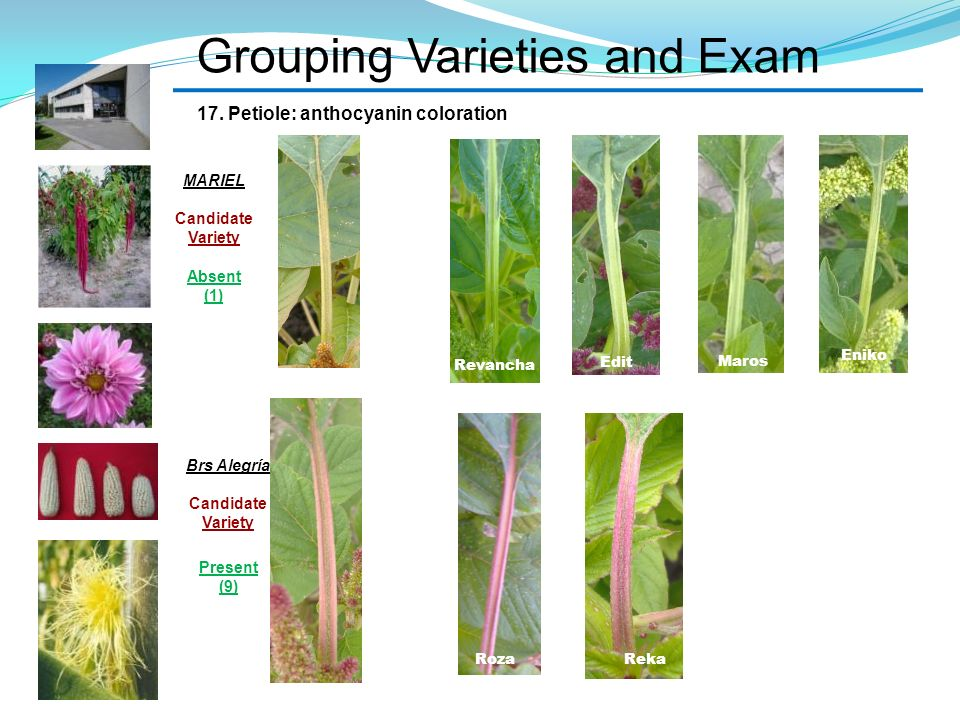 Grouping Varieties and Exam