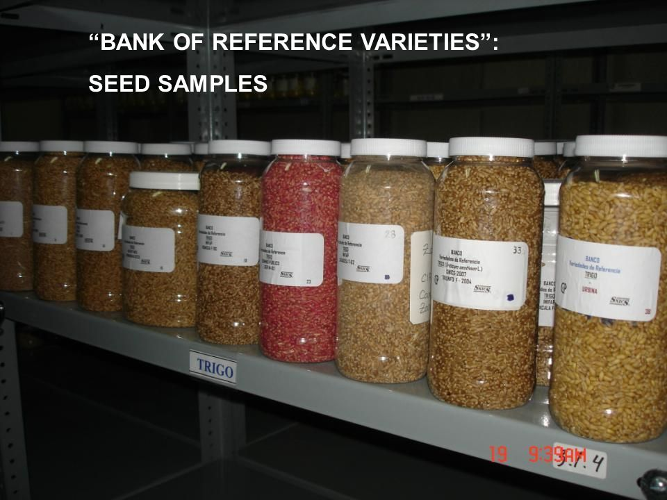 BANK OF REFERENCE VARIETIES : SEED SAMPLES