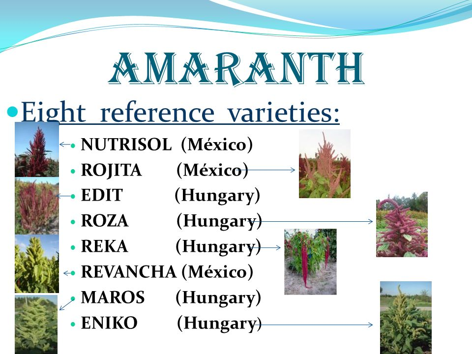 AMARANTH Eight reference varieties: NUTRISOL (México) ROJITA (México)