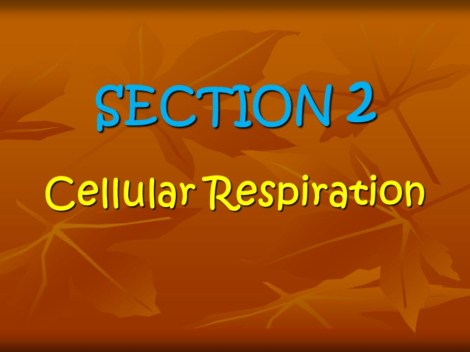 SECTION 2 Cellular Respiration