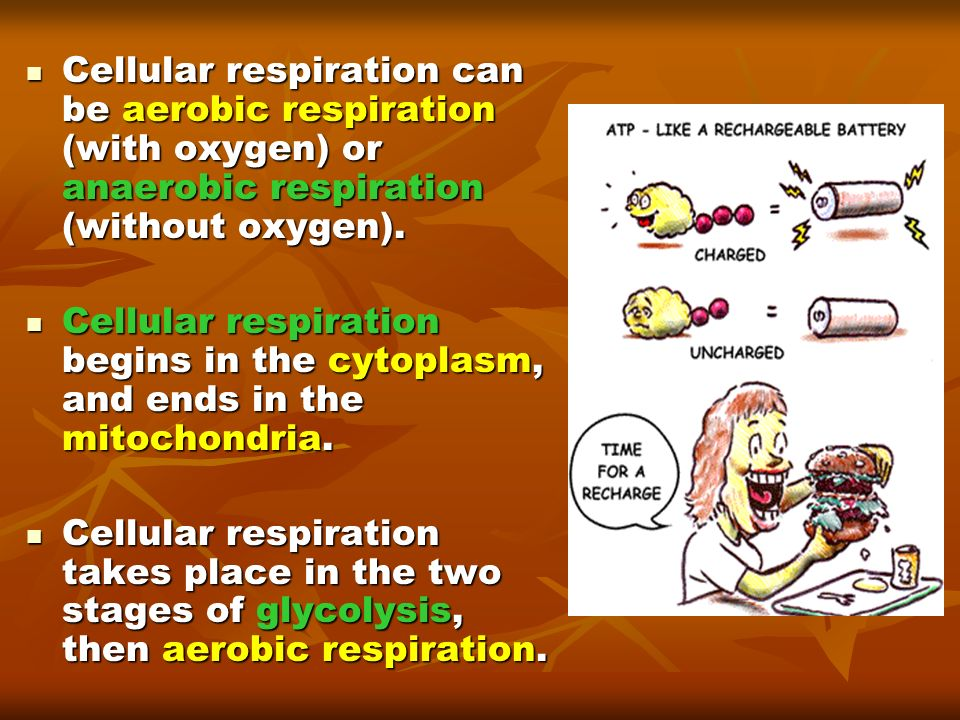 Cellular respiration can be aerobic respiration (with oxygen) or anaerobic respiration (without oxygen).