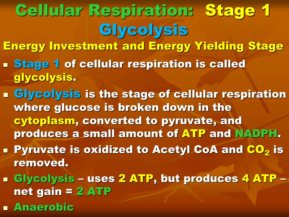 Cellular Respiration: Stage 1 Glycolysis Energy Investment and Energy Yielding Stage