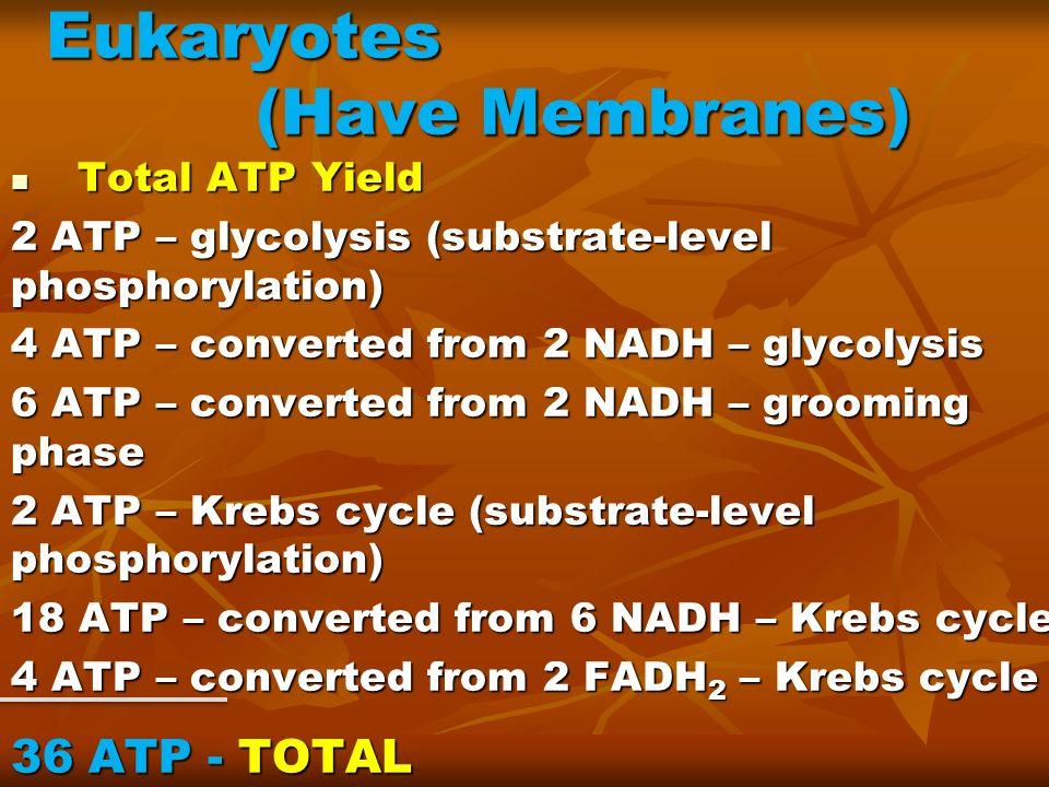Eukaryotes (Have Membranes)