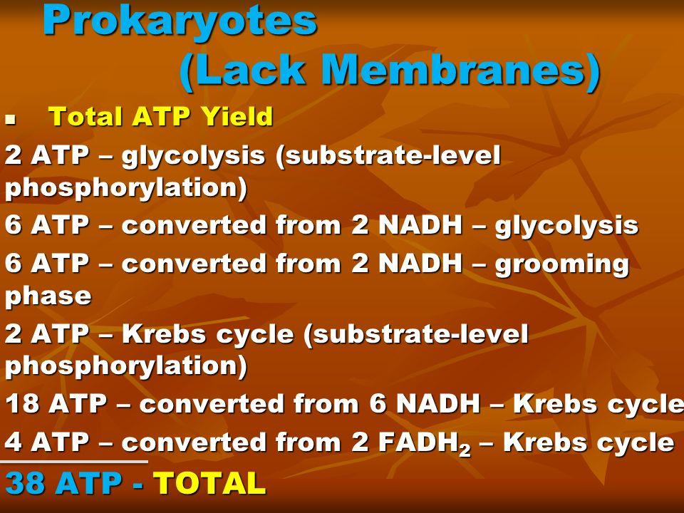 Prokaryotes (Lack Membranes)