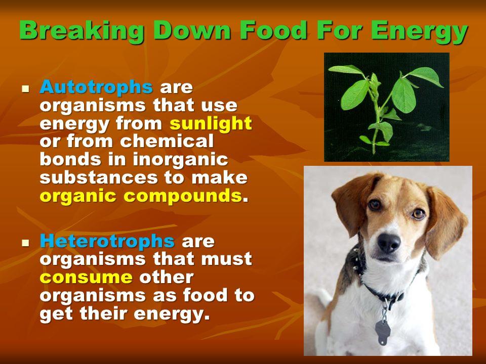 Breaking Down Food For Energy