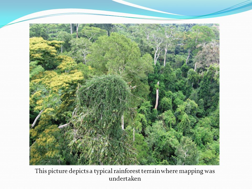 This picture depicts a typical rainforest terrain where mapping was undertaken