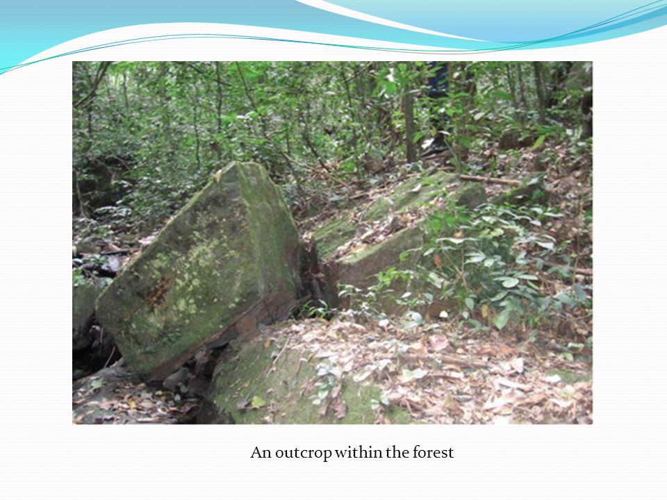 An outcrop within the forest