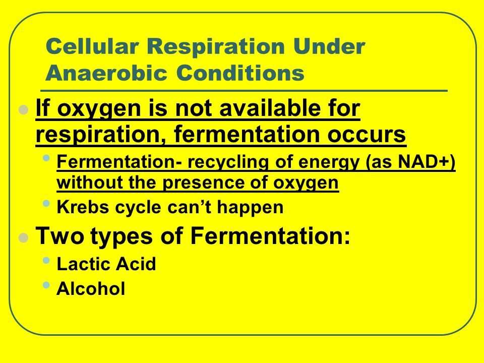 Cellular Respiration Under Anaerobic Conditions