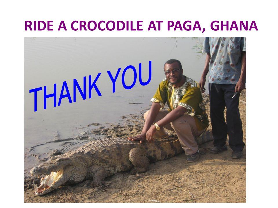 RIDE A CROCODILE AT PAGA, GHANA