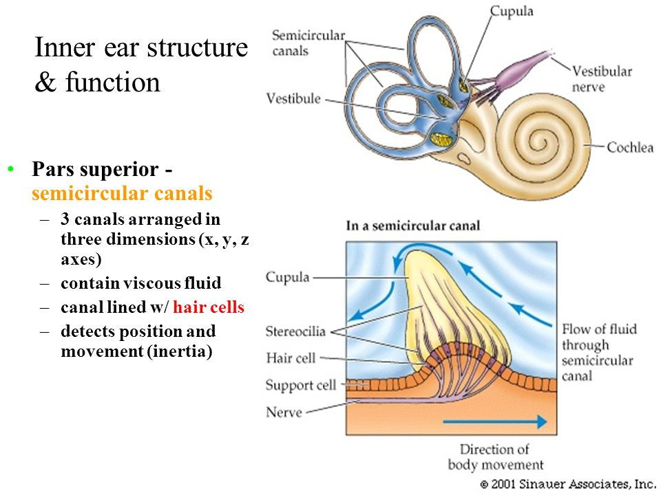 Sensory Systems Sound, Lateral line, Electroreception, etc ...
