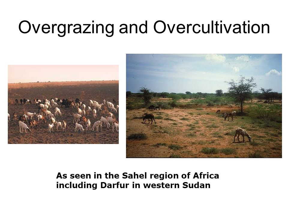 overgrazing over cultivation and deforestation Having more animals will accelerate overgrazing  over time, the more nutritious and palatable plants will be replaced by less nutritious plants.