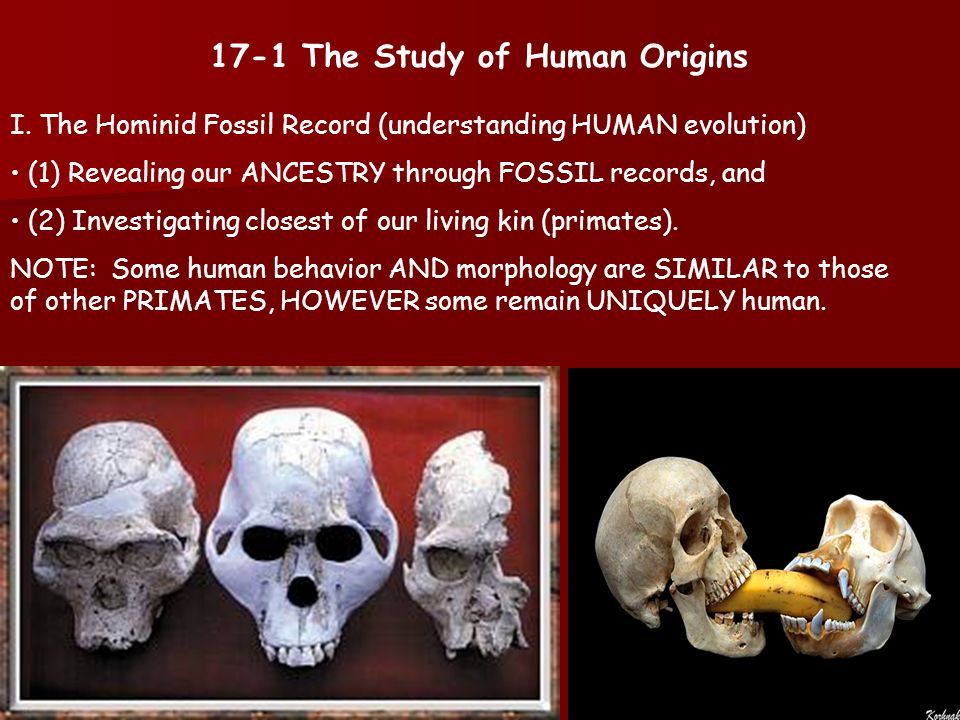 an analysis of absurdity in human evolution Mailbag: the absurdity of race realism march 4, 2012 june 10, 2017 emil karlsson ecotype , human genetic variation , race realism i am always happy to answer reader emails set to me via the contact form at the about page of this blog.