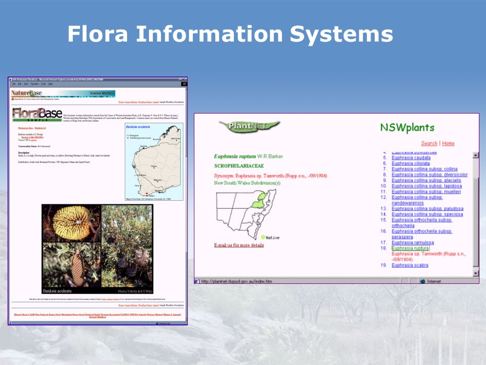 Flora Information Systems