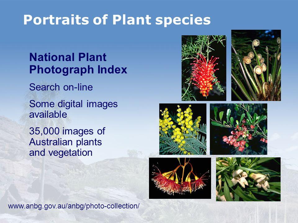 Portraits of Plant species