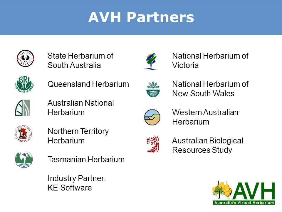 AVH Partners State Herbarium of South Australia Queensland Herbarium