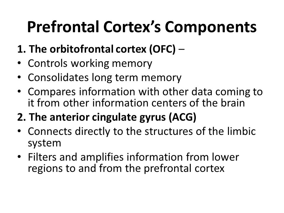 Prefrontal Cortex's Components