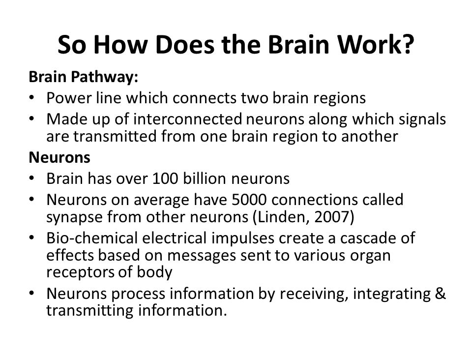 So How Does the Brain Work