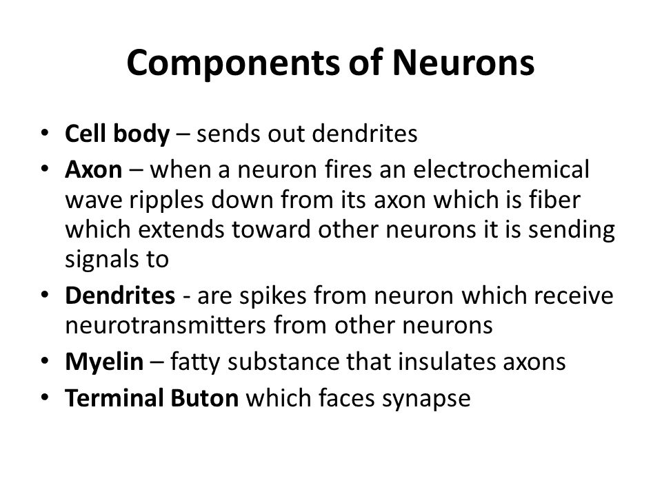 Components of Neurons Cell body – sends out dendrites