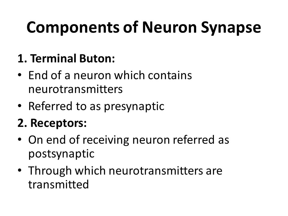 Components of Neuron Synapse