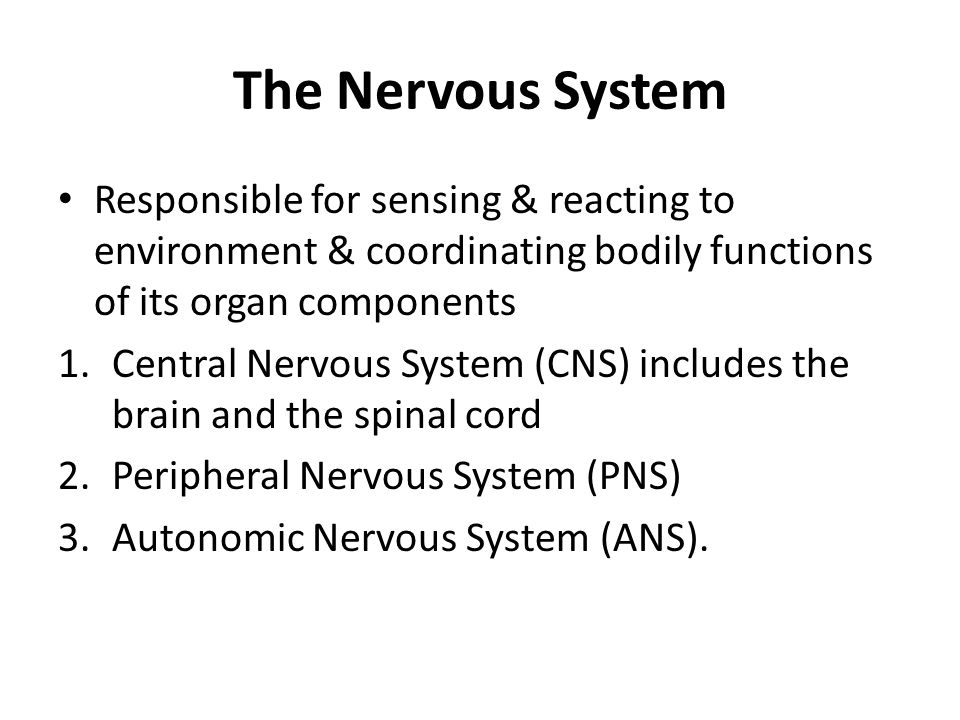 The Nervous System Responsible for sensing & reacting to environment & coordinating bodily functions of its organ components.