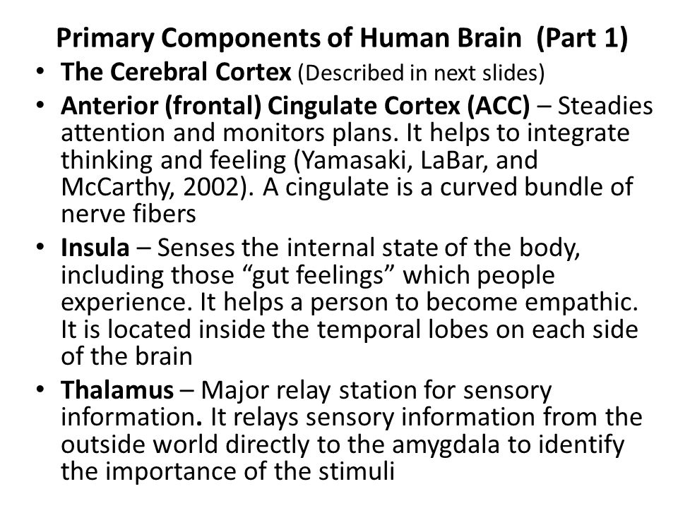 Primary Components of Human Brain (Part 1)