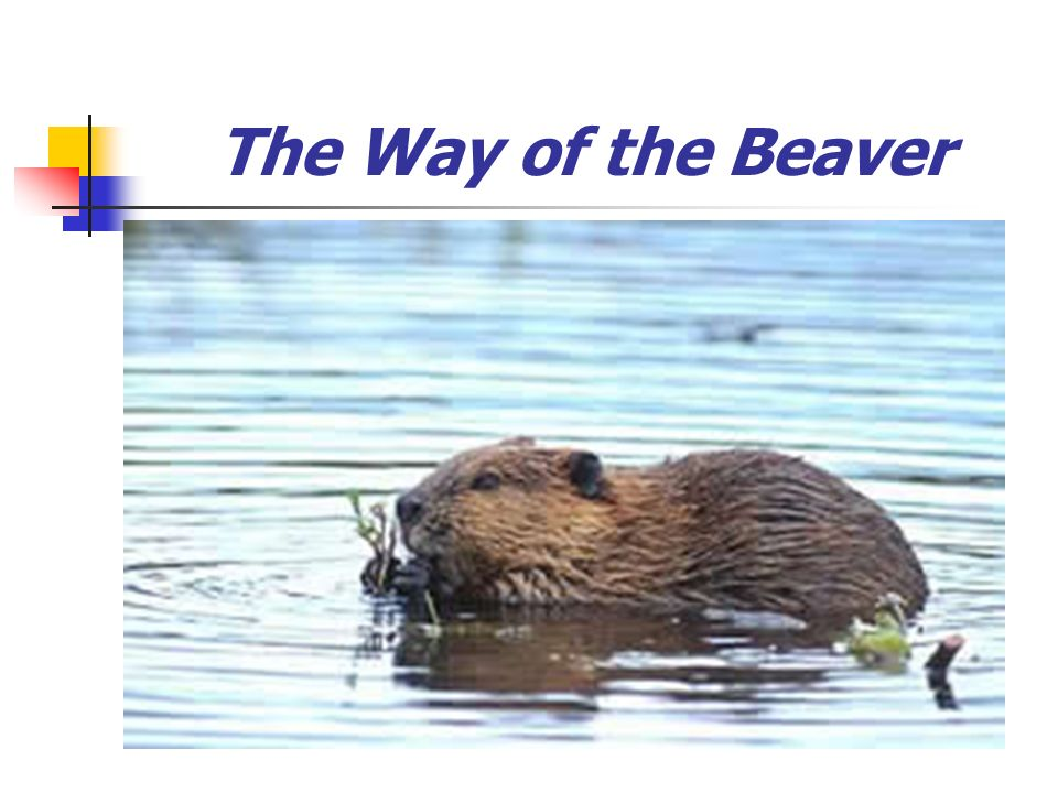 The Way of the Beaver