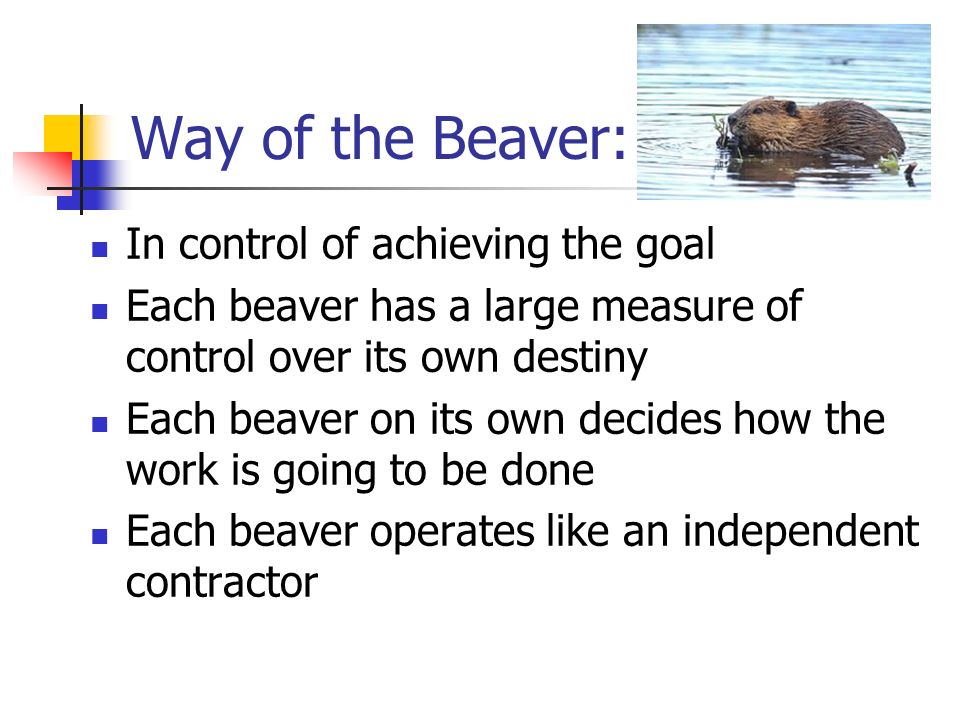 Way of the Beaver: In control of achieving the goal