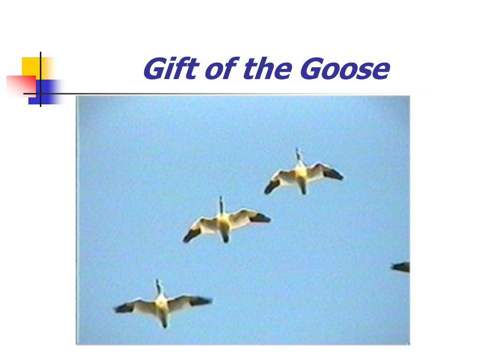 Gift of the Goose