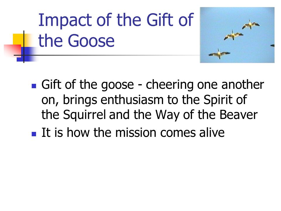 Impact of the Gift of the Goose