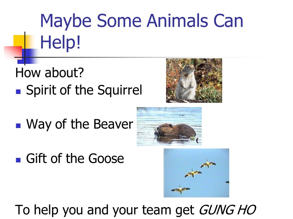 Maybe Some Animals Can Help!