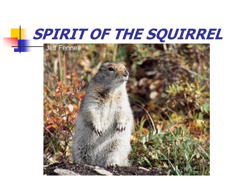 SPIRIT OF THE SQUIRREL