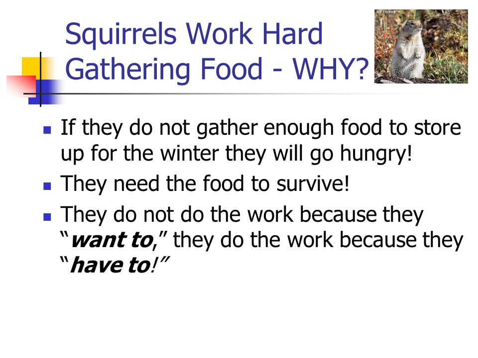 Squirrels Work Hard Gathering Food - WHY