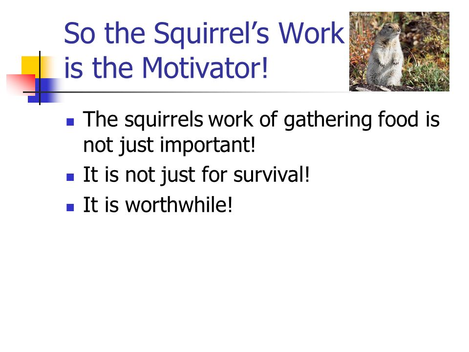 So the Squirrel's Work is the Motivator!