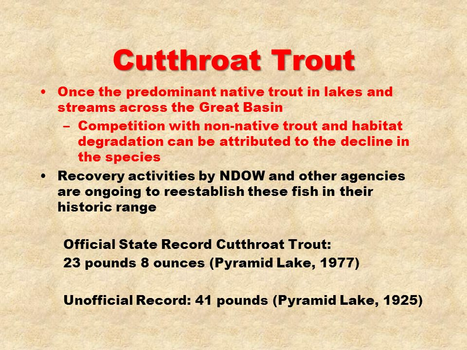 Cutthroat Trout Once the predominant native trout in lakes and streams across the Great Basin.