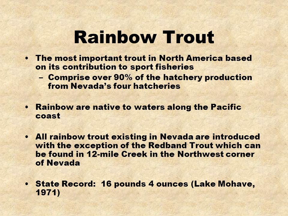 Rainbow Trout The most important trout in North America based on its contribution to sport fisheries.