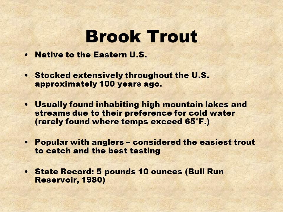Brook Trout Native to the Eastern U.S.