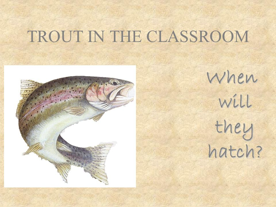 TROUT IN THE CLASSROOM When will they hatch