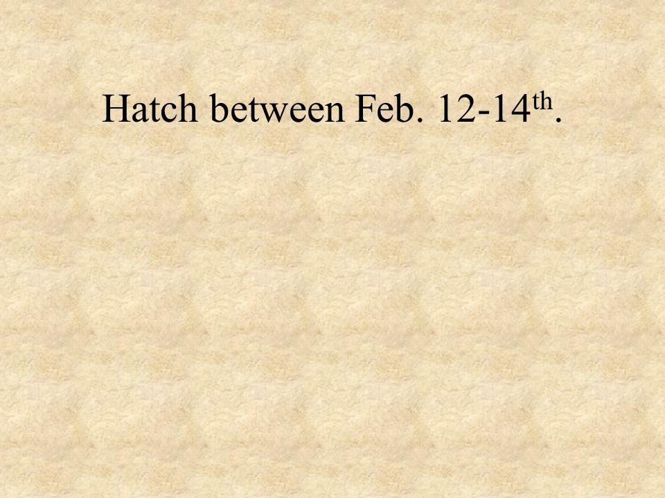 Hatch between Feb. 12-14th.