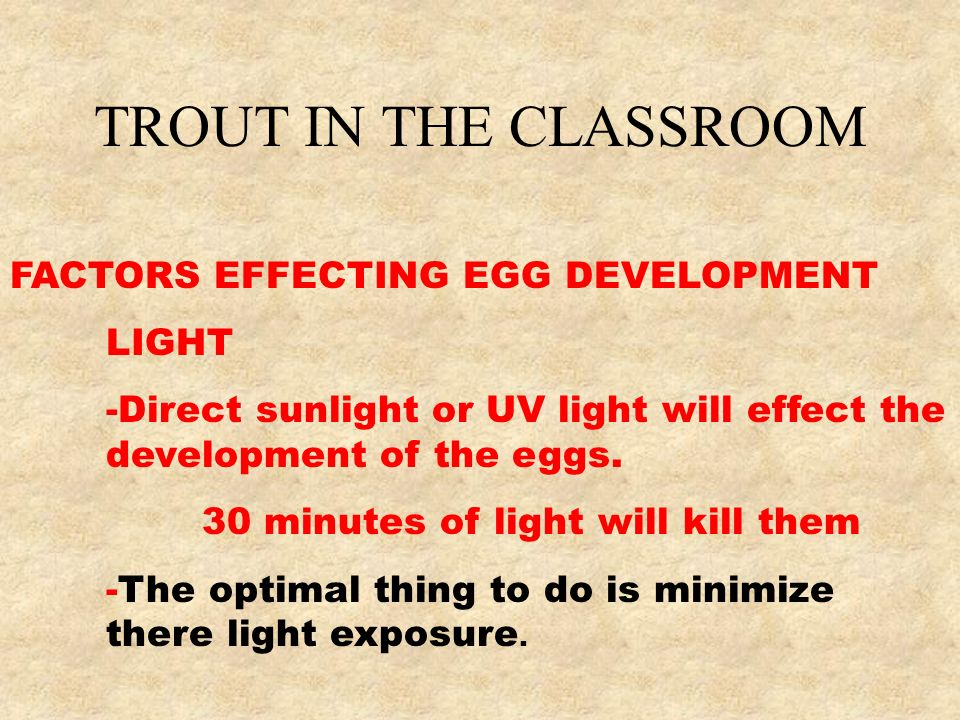 TROUT IN THE CLASSROOM FACTORS EFFECTING EGG DEVELOPMENT LIGHT