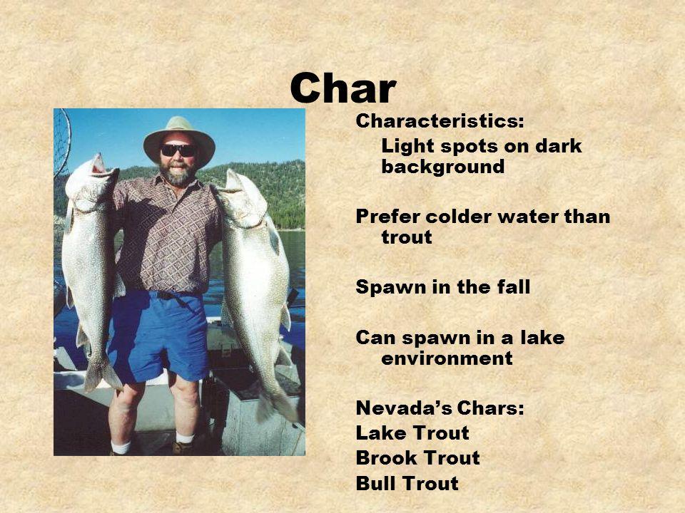 Char Characteristics: Light spots on dark background