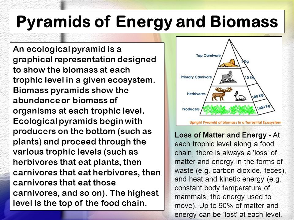 Pyramids of Energy and Biomass