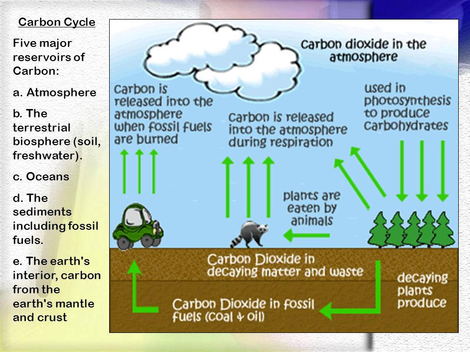 Carbon Cycle Five major reservoirs of Carbon: a. Atmosphere. b. The terrestrial biosphere (soil, freshwater).