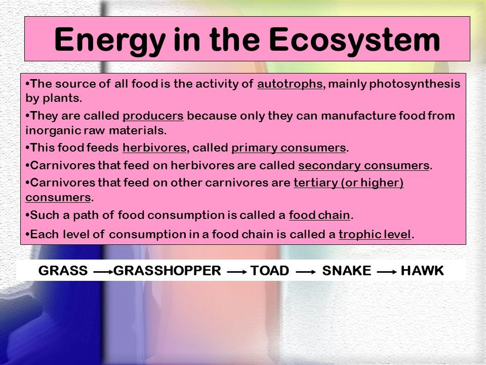 Energy in the Ecosystem GRASS GRASSHOPPER TOAD SNAKE HAWK
