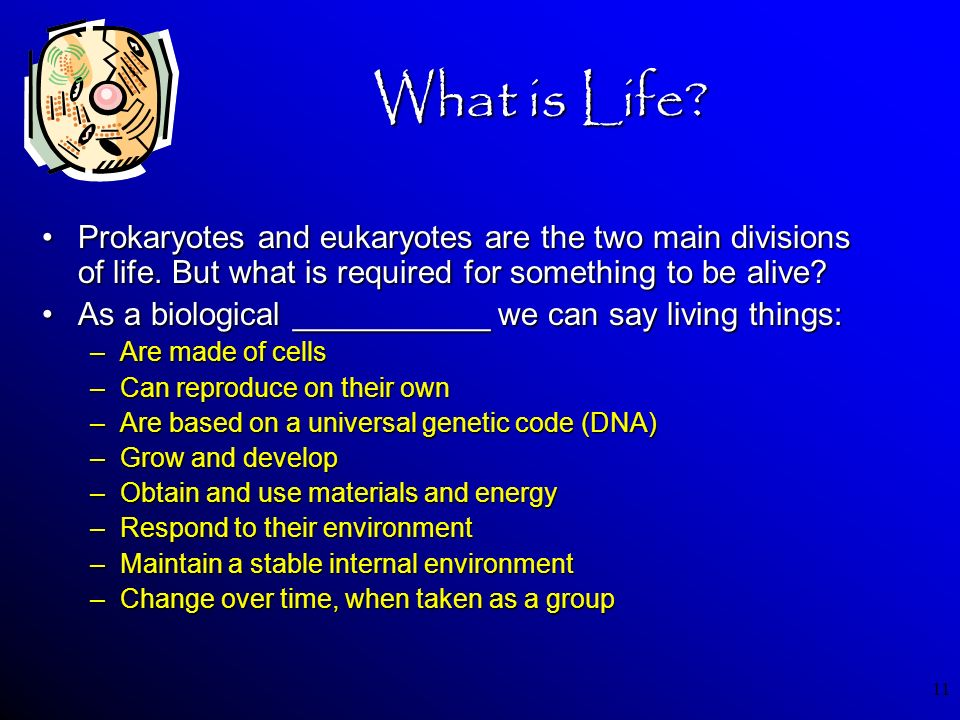 What is Life Prokaryotes and eukaryotes are the two main divisions of life. But what is required for something to be alive