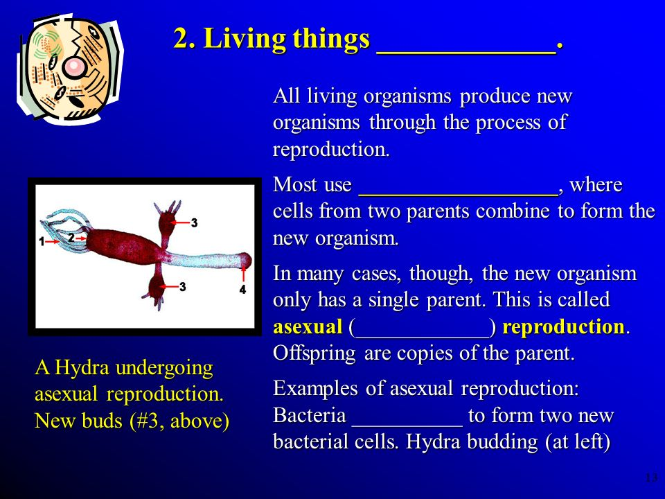 2. Living things ____________.