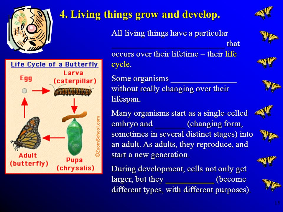 4. Living things grow and develop.