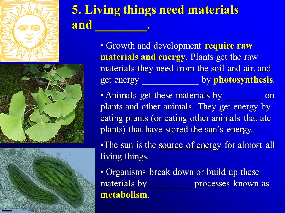5. Living things need materials and ________.