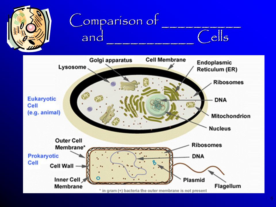 Comparison of __________ and ___________ Cells