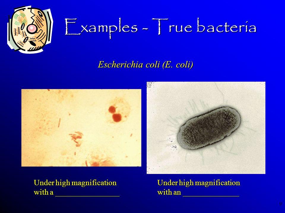 Examples - True bacteria